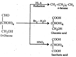 NCERT Solutions For Class 12 Chemistry Chapter 14 Biomolecules-7