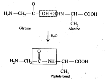 NCERT Solutions For Class 12 Chemistry Chapter 14 Biomolecules-8