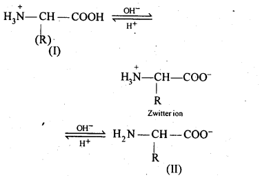 NCERT Solutions For Class 12 Chemistry Chapter 14 Biomolecules-11