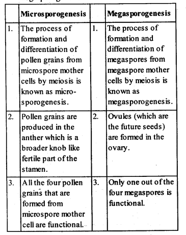ncert-solutions-for-class-12-biology-sexual-reproduction-in-flowering-plants-1