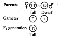 ncert-solutions-for-class-12-biology-principles-of-inheritance-and-variation-3