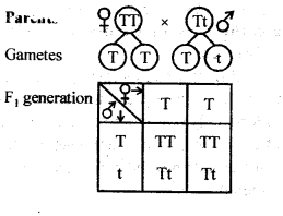 ncert-solutions-for-class-12-biology-principles-of-inheritance-and-variation-5