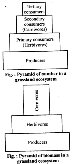 ncert-solutions-for-class-12-biology-ecosystem-1